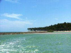 Arrecifes e Coqueiros em Tamandaré<