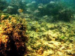 Cardume de Peixes em Piscina Natural