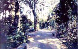Bosque Municipal Marechal Cândido Rondon